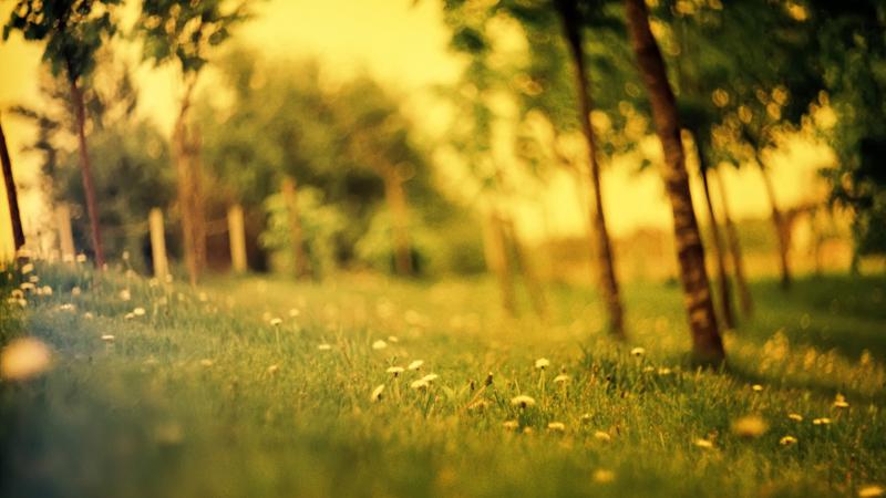 Summer-Grass